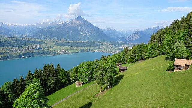 Blick von Beatenberg auf den Thunersee, dahinter der Niesen mit einer einzigen Quellwolke.