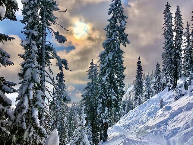 Die Sonne bricht durch die Wolken. Der Wald ist verschneit.