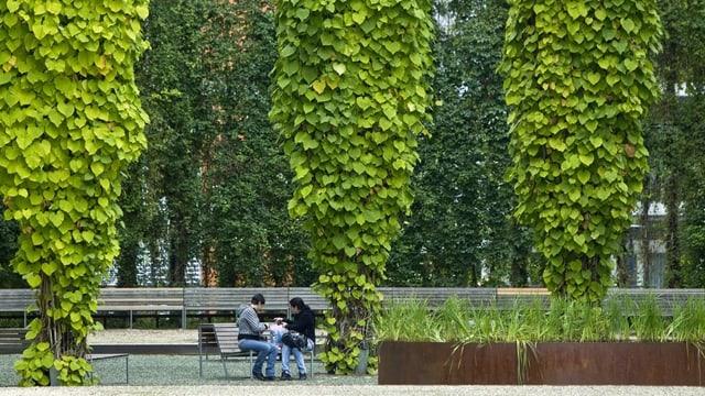 Park mit Pflanzen und Bänken