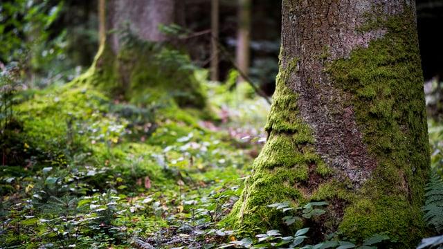 Wald und Baumstämme