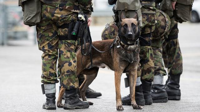 Armeehund