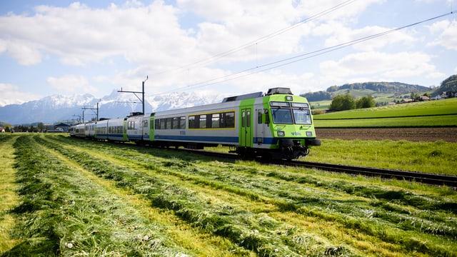 BLS-Zuge fährt an einer frisch gemähten Wiese vorbei.