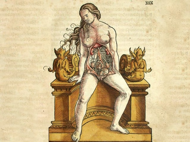 Die inneren Organe Organe einer Frau-