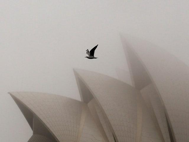 Das Opernhaus im dichten Nebel im Mai 2013.