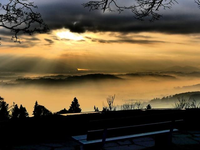 Bänkli mit sicht auf gelbes Nebelfeld