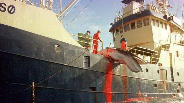 Walkörper hängt über den Rand eines Schiffes.