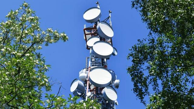 Richtfunk Sendemast am Fernsehturm Müggelberge, umringt von Bäumen.