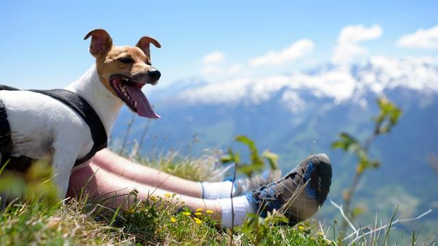 Hund vor Bergkulisse