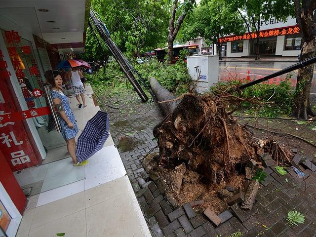 Frau schaut auf entwurzelten Baum