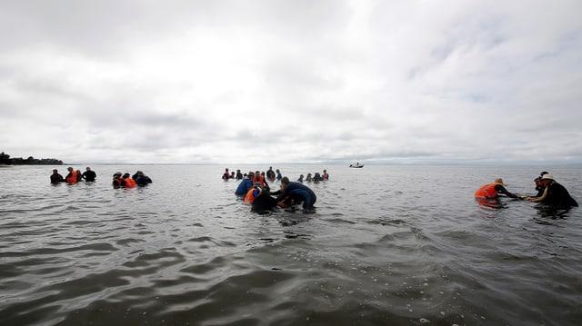 Blers voluntaris han gidà da manar enavos las balenas.