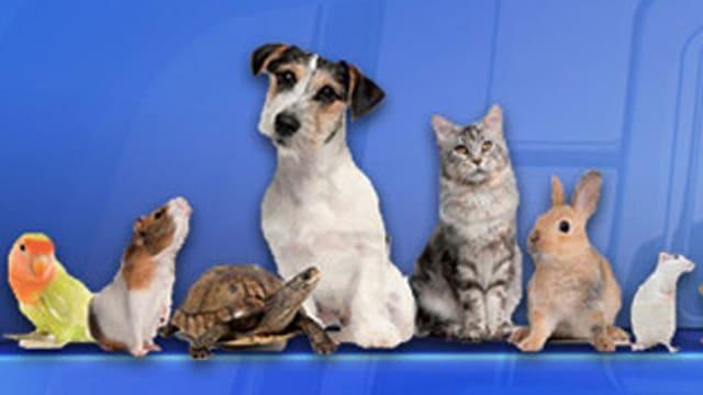 Mehr zu Tierkauf und -haltung
