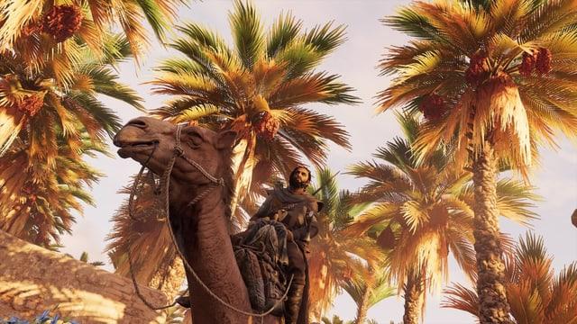 Held und Kamel