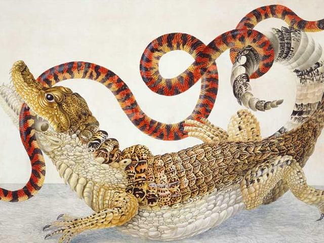 Illustrationen eines Caiman crocodilus und eines Anilius scytale.