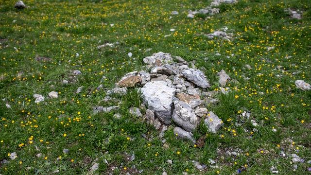 Alpwiese mit Steinen in der Mitte