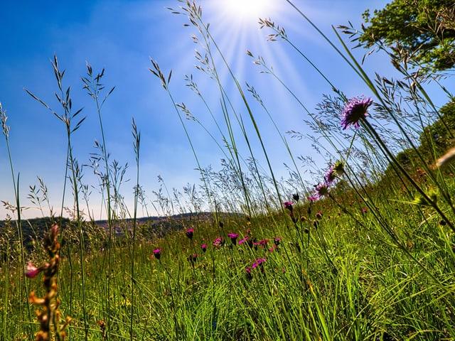 Blumenwiese, blauer Himmel und Sonnenschein.