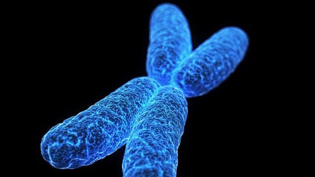 Ein X-Chromosom.