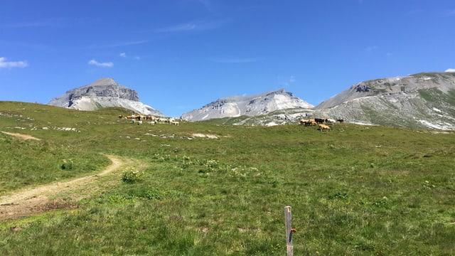 Il territori da viandar tranter l'Alp Nagens e Grauberg sur Laax.