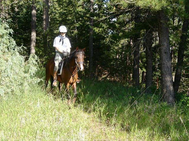 Brigitte von Rechenberg reitet auf einem Pferd über eine Waldwiese.