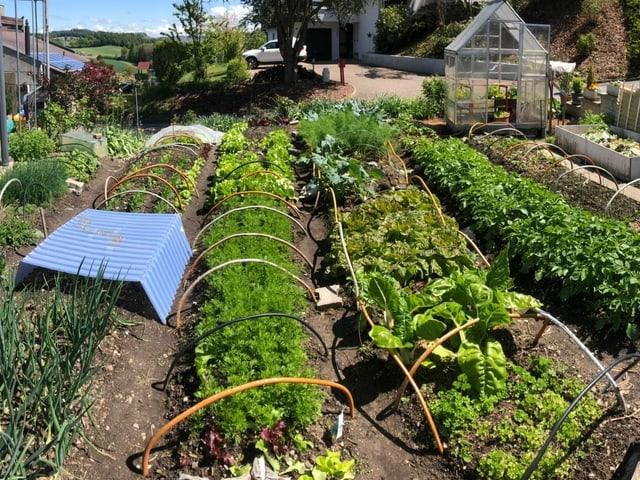 Gemüseanlage unter Treibhauszelten.