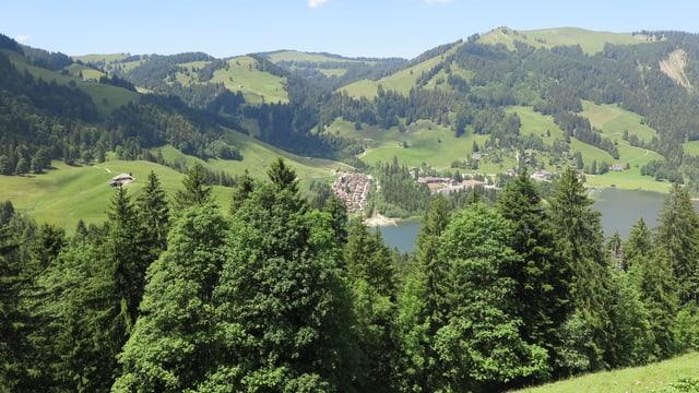 Bild von Freiburger Wäldern