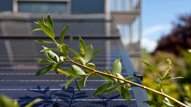 Ein Dach mit Solarzellen, darüber rankt sich der Ast eines Baumes