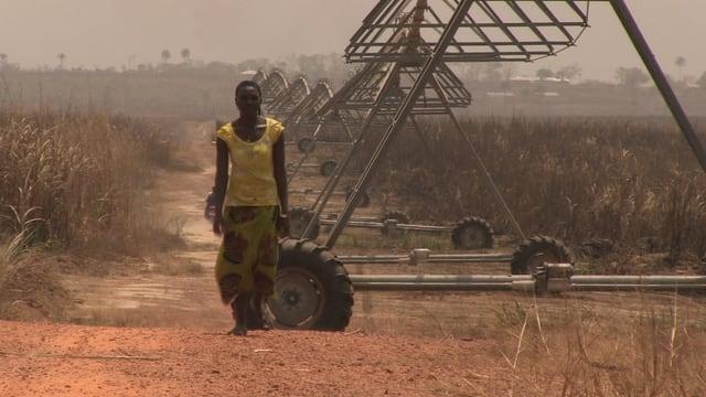 Person auf Feld in Sierra Leone.