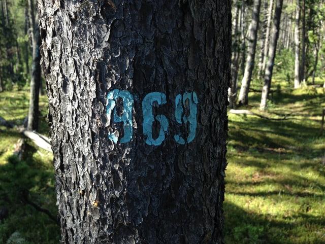 Planta cun il nummer 969.
