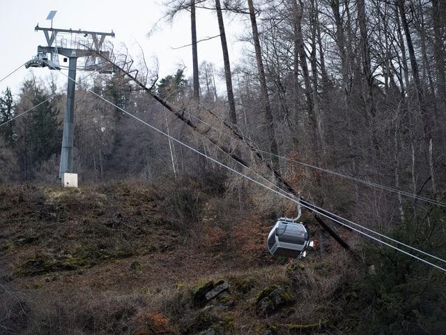 Bäume auf Tragseile der Bergbahn in Pizol.