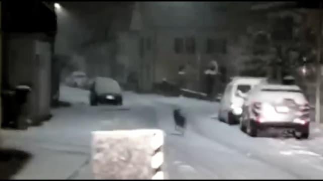 Ein Tier rennt davon.