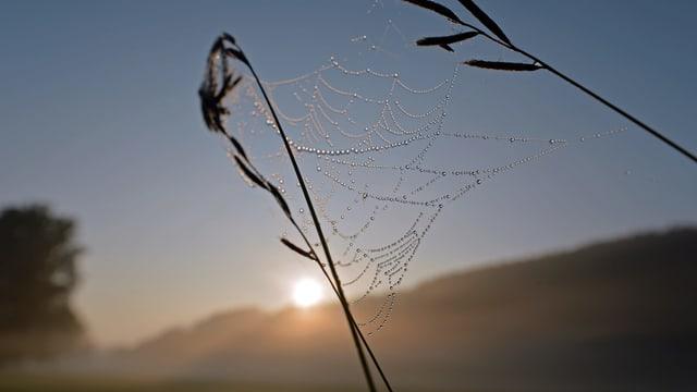 Spinnennetz mit Tau in der Morgensonne.