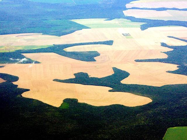 Bild von oben: Die braunen Flecken sind die gerodeten Gebiete im grünen Regenwald.