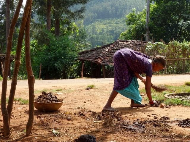 Eine Frau bückt sich, um am Boden liegenden Kuhdung einzusammeln.