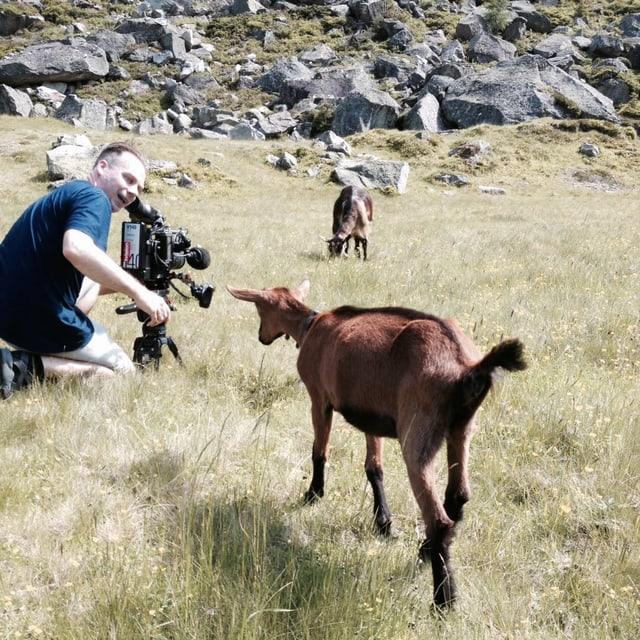 Eine Ziege nähert sich einem Kameramann, der im Gras kauert.