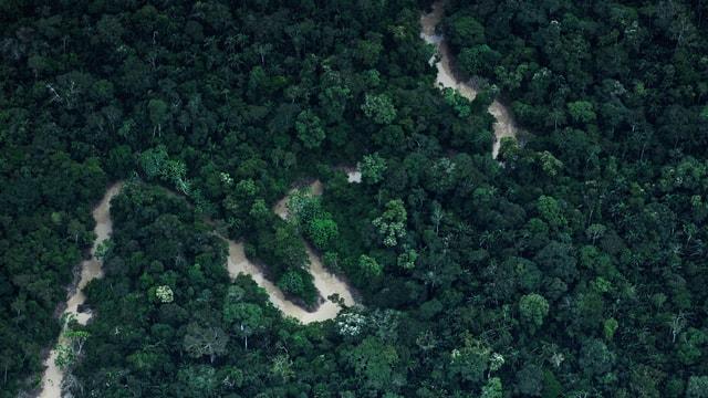 Eine Luftaufnahme des Regenwaldes im Nordwesten Brasiliens.