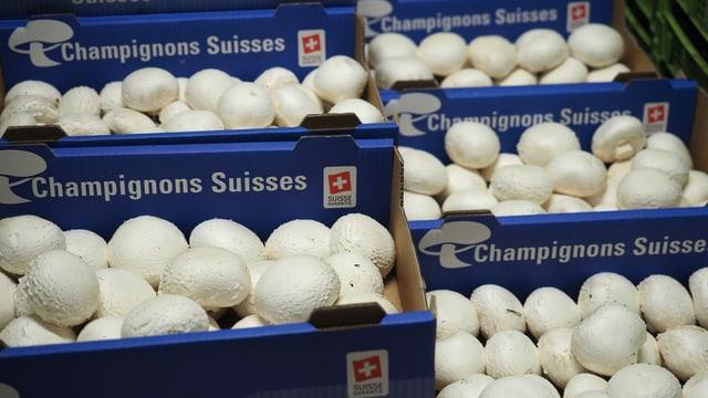Blaue Schachleln mit weissen Champignons im Kühllager.