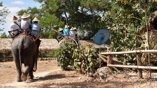 Touristen reiten auf Elefanten.