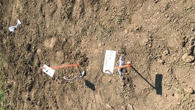 Aus dem braunen Ackerboden schauen zwei orange Fähnchen hervor, die mit Namen und Datum der Unterhosenspender beschriftet sind.