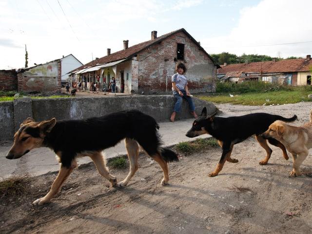 Drei Hunde gehen einen Weg entlang, dahinter ein Mädchen auf einer kleinen Mauer. Im Hintergrund sehr einfache Häuser.