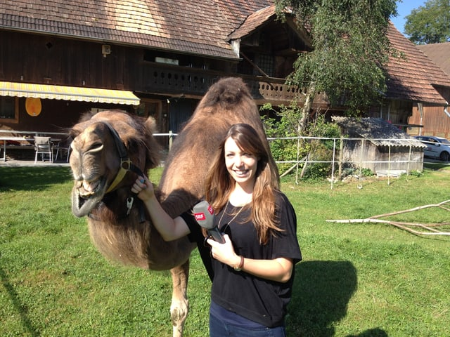 SRF 3 Reporterin Simona Caminada mit Dromedar Sahiba (Muttertier, 13 Jahre).