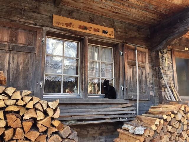 Katze auf Fenstersims