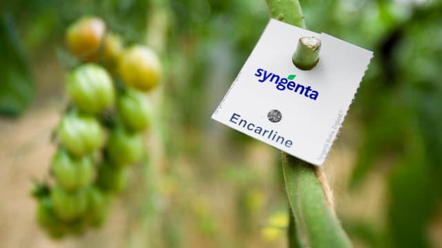 Syngenta ha fatg l'emprim quartal da quest onn 1% damain svieuta.