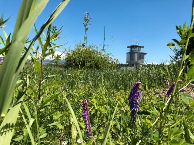 Natur auf dem Waffenplatz Thun