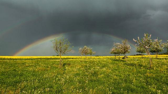 Dicke Regenwolken und ein Regenbogen über Obstbäumen und einem Rapsfeld in Mettlen/TG.