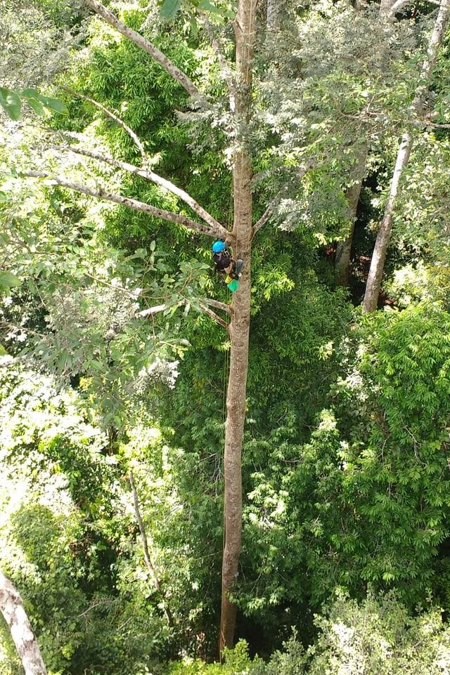 Eine Frau mit Helm auf einem Baum.