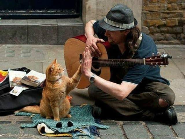 Strassenmusiker gibt einer Katze ein «High Five».