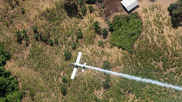 Ein Polizei-Flugzeug sprüht in der Region El Tarra Herbizide über illegale Coca-Felder.