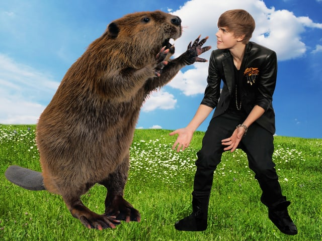 Es wart Frühling, als es geschah: Biber trifft Bieber.