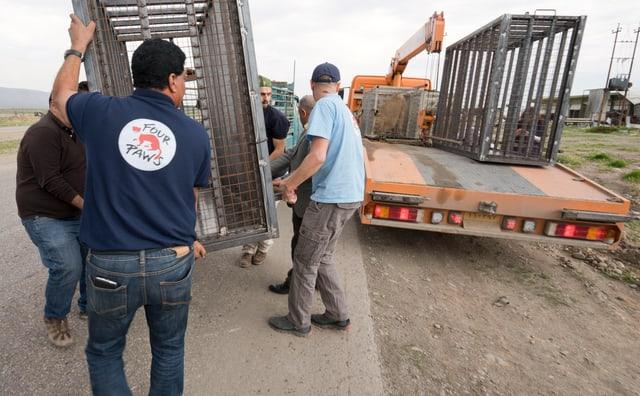 Ein Käfig mit einem Tier wird abtransportiert.