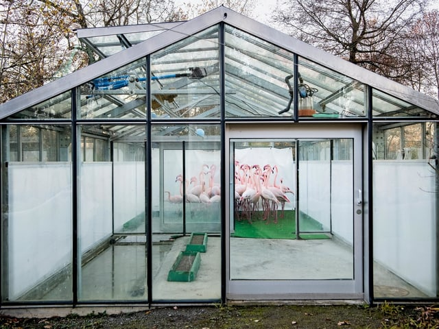 Anthony Anex: «Vogelgrippe».