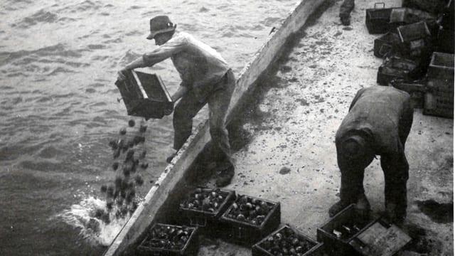 Man entsorgt Munition im See. Schwarz-Weiss-Aufnahme.